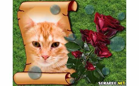 Moldura - Rosas Vermelhas