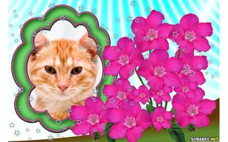 5119-Belissimas-flores-naturais