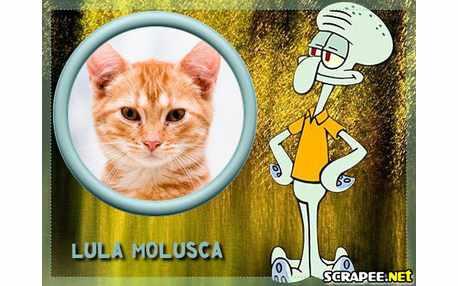 3532-Lula-molusca