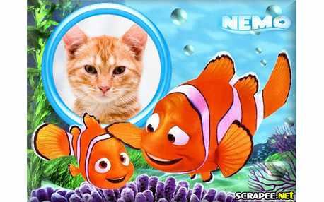 3566-Nemo