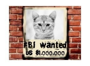 Scrapee.net - Fotomontaje FBI Wanted