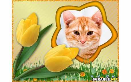 3703-Tulipa-amarela