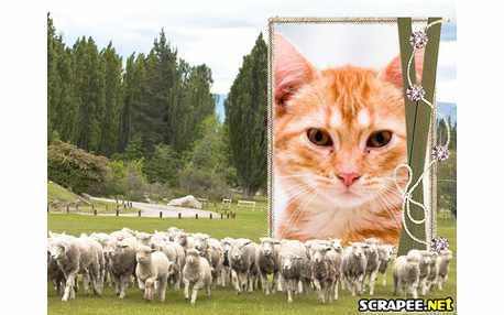 3761-Rebanho-de-ovelhas