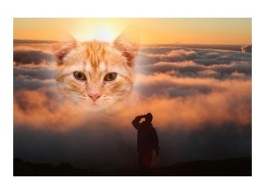 Moldura - Sun Rises Over Maui