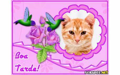 Moldura - Scrap Beija Flor De Boa Tarde