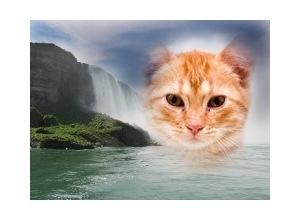 Moldura - Falling Water