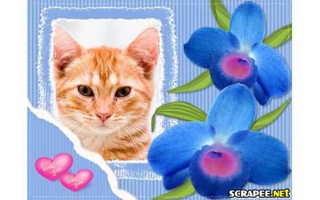 3893-Orquideas-azuis