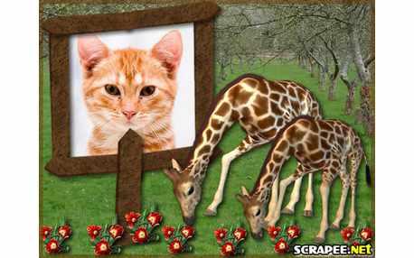 Moldura - Girafas No Bosque