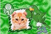 5178-Palmeiras-Verdao