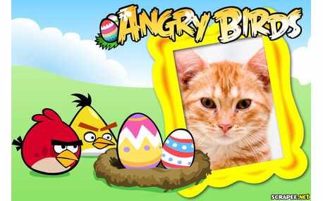 Moldura - Angry Birds   Jogo