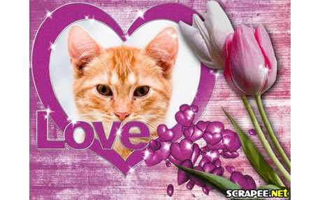 4189-Tulipas-com-amor