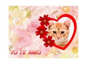Yo-te-Amo