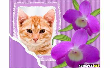 Moldura4377 Orquidea lilas