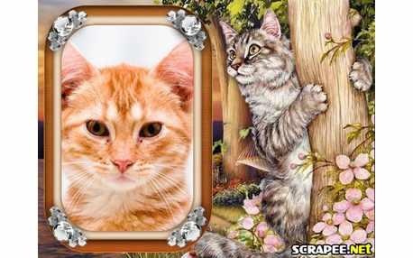 Moldura - Gato