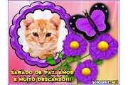 4426-Flores-roxas---Sabado
