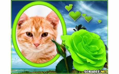 4502-Rosa-verde
