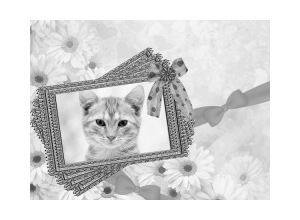 MolduraGrayscale photo frame