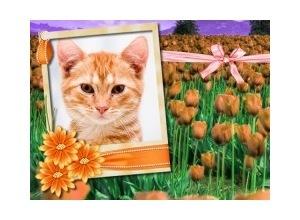 Moldura - Orange Flowers