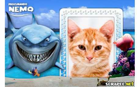 4741-Prucurando-Nemo---Tubarao