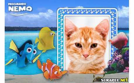 Moldura - Filme Procurando O Nemo