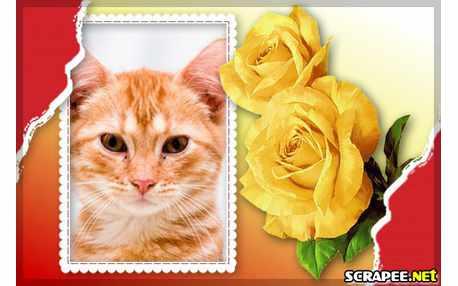 4886-Rosas-amarelas