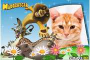 4916-Madagascar