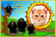 4963-Macacos---Bom-Dia