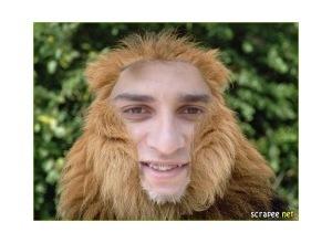 The-Lion