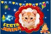5473-Festa-junina