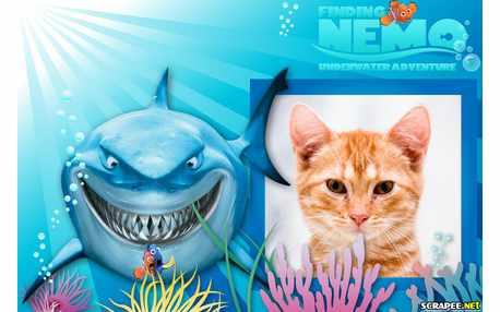 5487-Procurando-Nemo-2