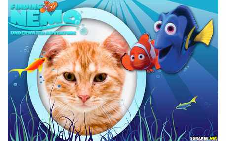 5488-Filme-Procurando-Nemo-2