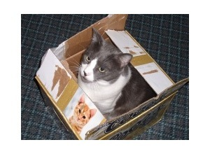 Scrapee.net - Photomontage Cat in Box