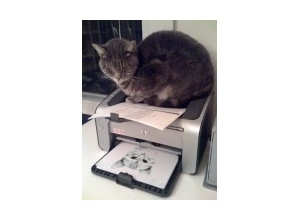 Montagem de foto The cat and the printer
