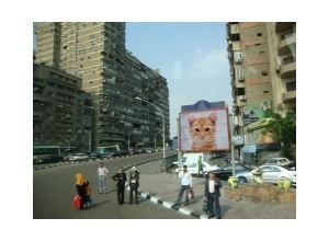Montagem de foto Outdoor Advertising Cairo Egypt