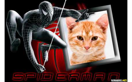 5629-Spider-Man