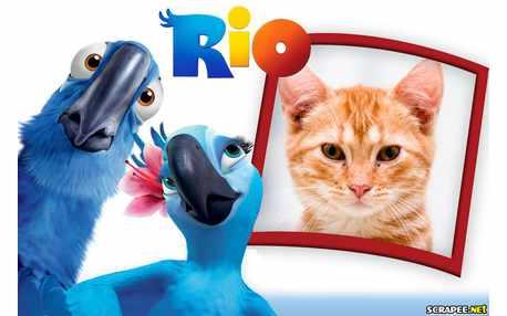 Moldura - Filme Rio
