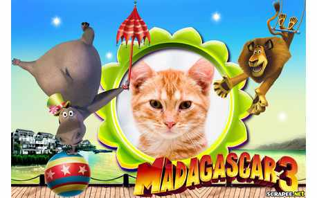 Moldura - Madagascar 3