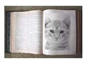 Scrapee.net - Fotomontaje Old Bible