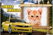 6117-Moldura-de-Camaro-Amarelo