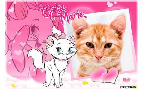 6262-Gata-Marie