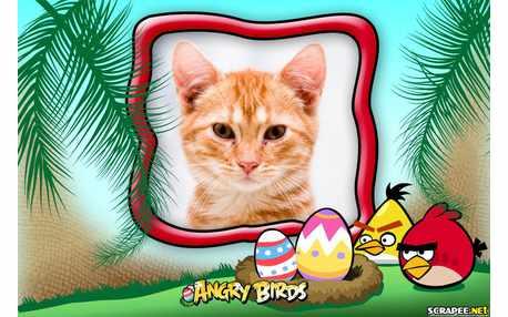 6618-Desenho-do-jogo-Angry-Birds