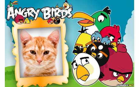 Photo-frames Angry birds