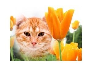 Orange-Flower