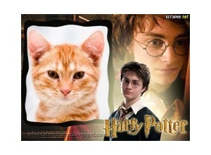 Moldura - Harry Potter Frame