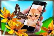 7046-Iphone-6-montagem-flor-e-borboleta