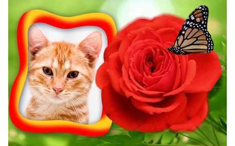 Moldura de flor vermelha com borboleta