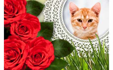 Moldura - Rosas Vermelhas Na Renda