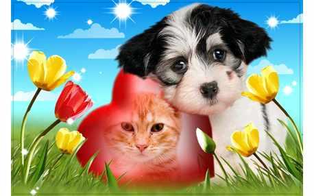 Moldura - Cachorrinho Carinhoso Foto No Coracao