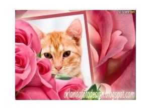 Moldura - Rosas Lindas