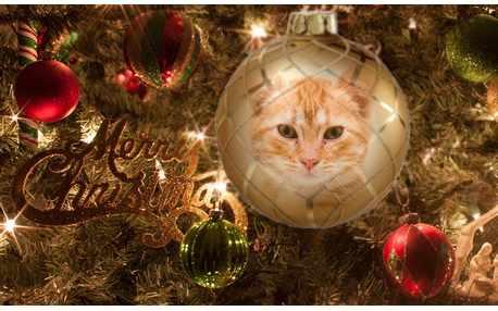 Moldura - Merry Christmas 2016